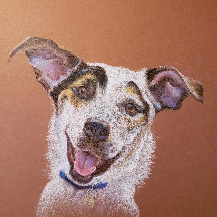"""Rufus. Colored pencil on toned paper. 10"""" x 10"""""""